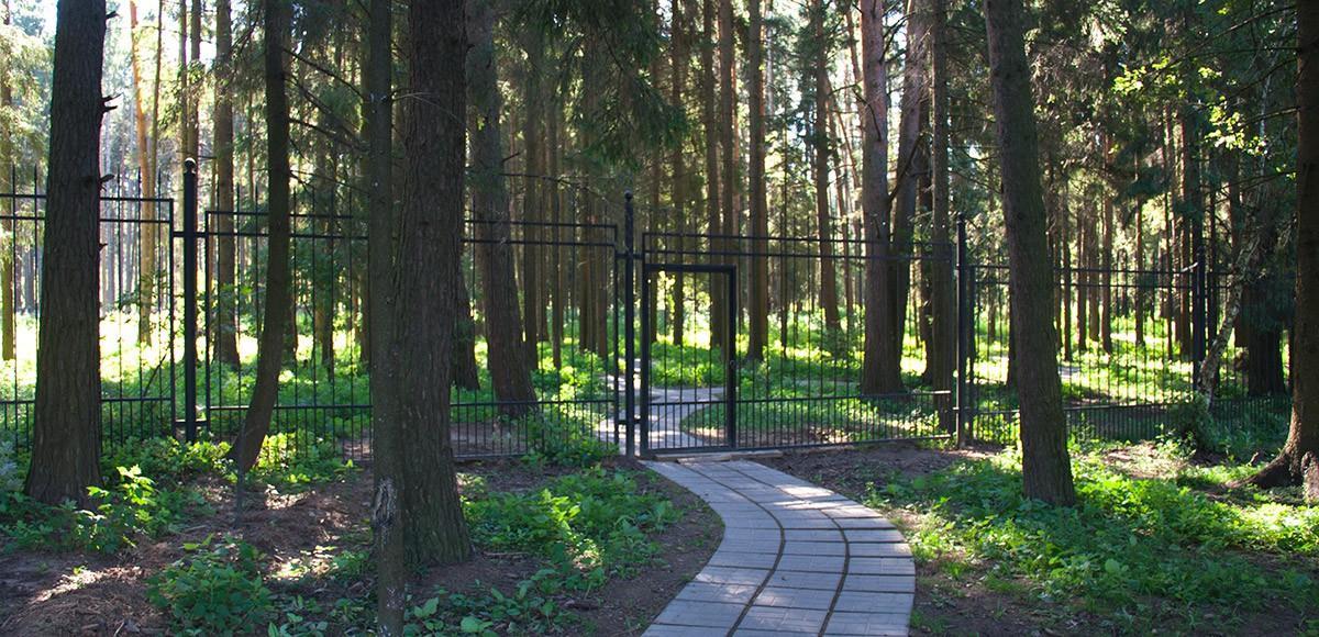Выход в лес из поселка Ренесанс Парк