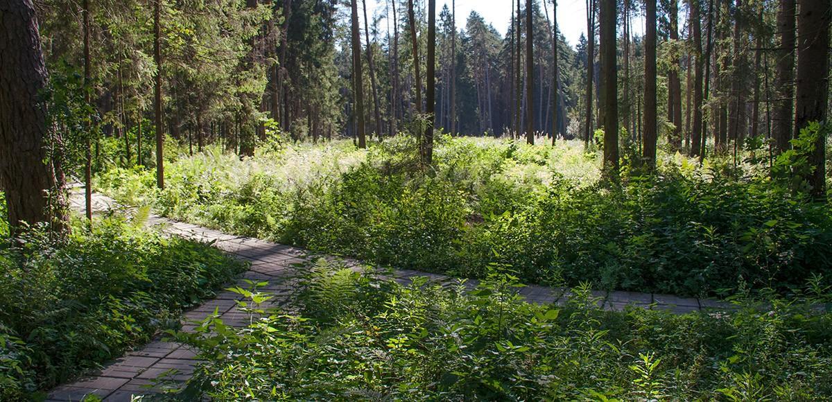 Прогулочные дорожки в лесу для жителей Ренесанс Парка