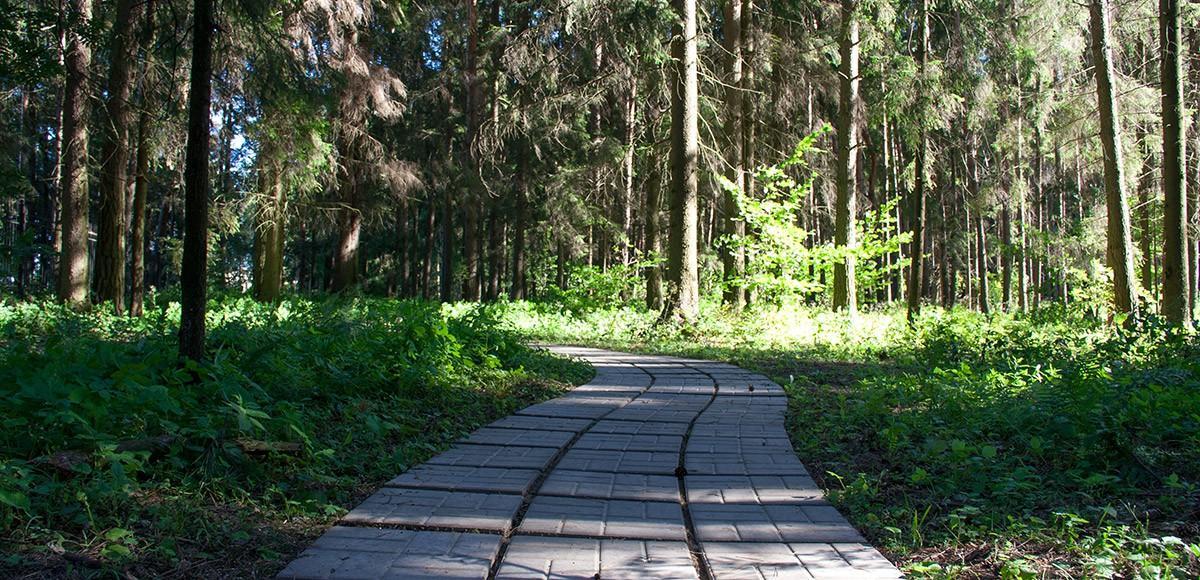 Прогулочная дорога от Ренесанс Парка к Миллениум Парку через лес
