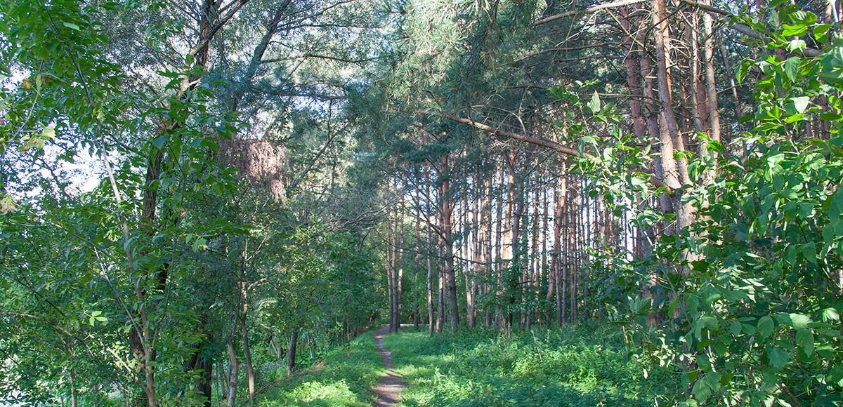 Лес рядом с КП Шервуд