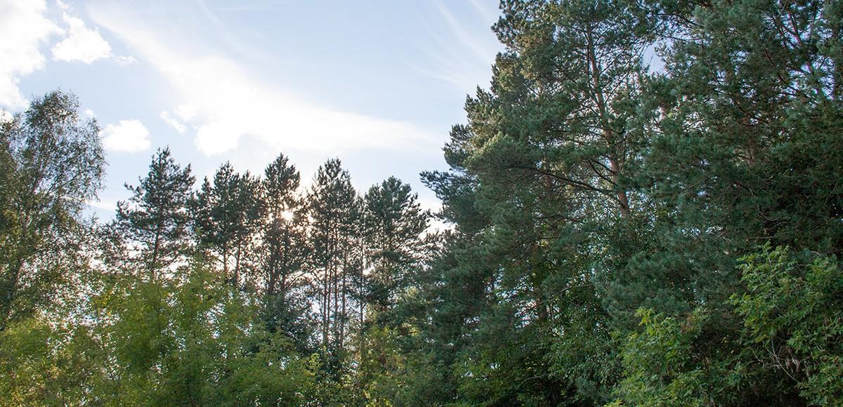 Лес за границей поселка Шервуд