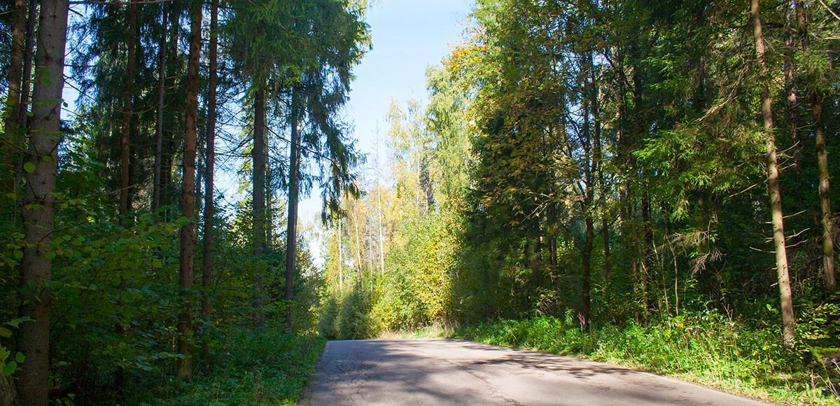 Дорога к поселку Лазурный берег идет через смешанный лес