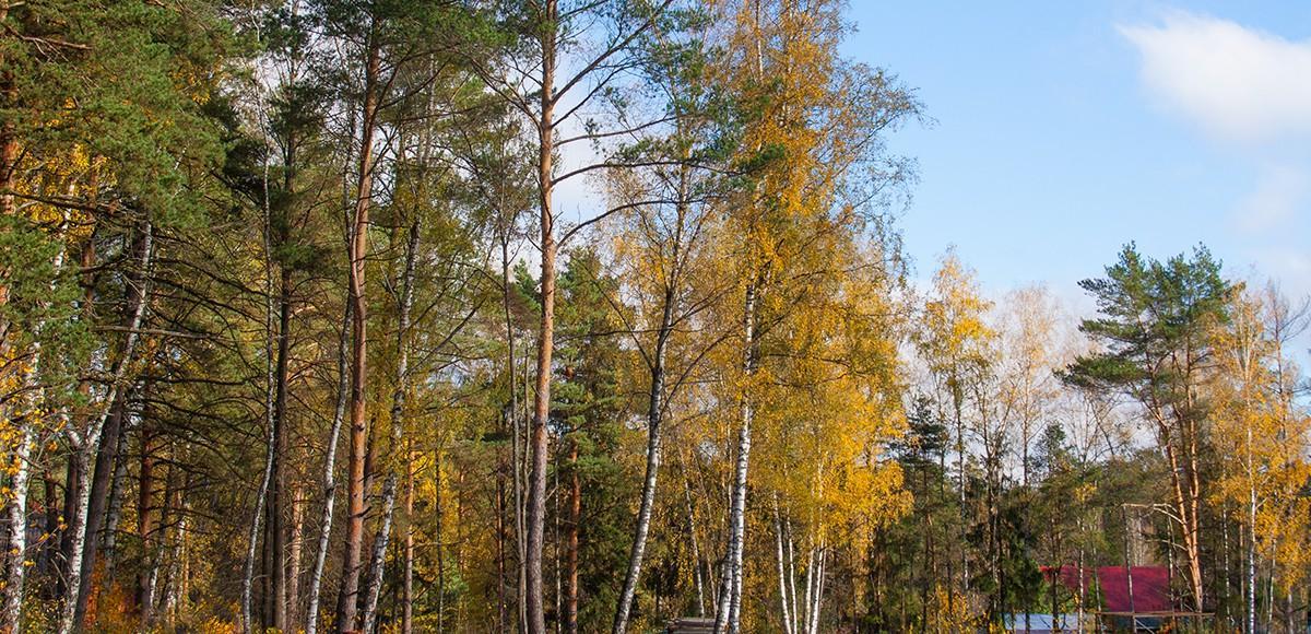 Лес на территории поселка Серебряная Роща