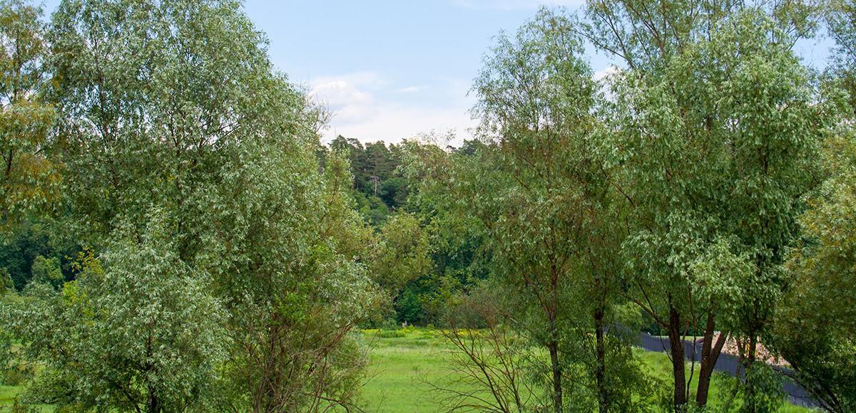 Наслаждайтесь видом на лес, КП Французский квартал
