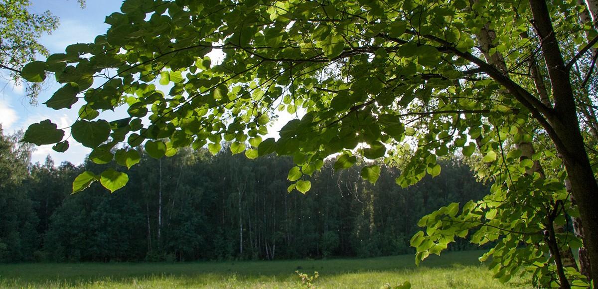 Лес рядом с КП По-Рижская мечта