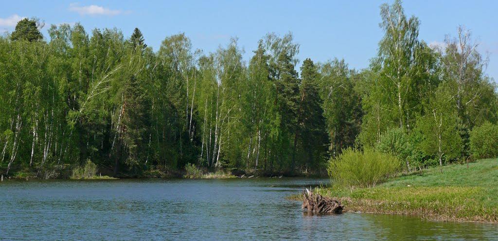 Река Липка недалеко от поселка Прозорово