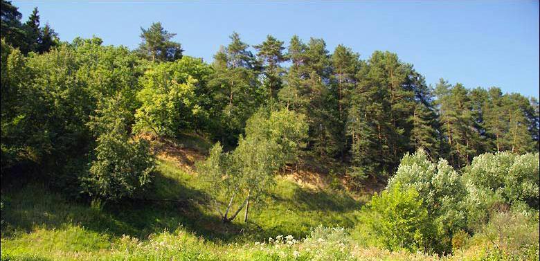 Смешанный лес недалеко от поселка Прозорово
