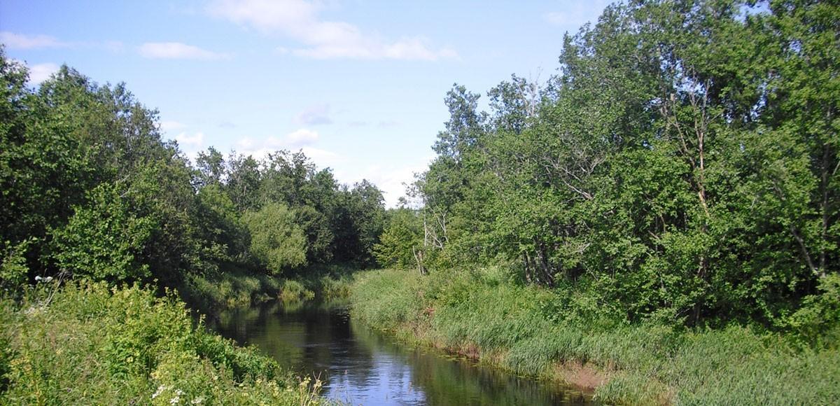 Река Медведка недалеко от поселка Усово