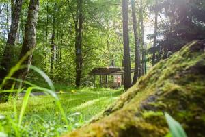 Лесной массив в ЖК Усово