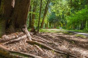 Лесные дорожки в ЖК Усово